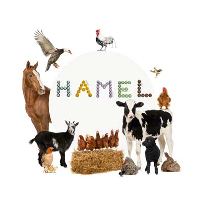 animaux-ferme-elevage-loisirs-hamel